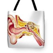 Cutaway Diagram Of Human Ear Tote Bag