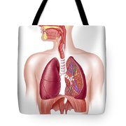 Cutaway Diagram Of Human Respiratory Tote Bag