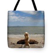 Cute Cocker Spaniel Tote Bag