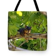 Cute Fuzzy Squirrel In Tree Tote Bag