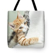 Cute Ginger Kitten In Igloo Tote Bag
