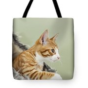 Cute Ginger Kitten On The Loookout Tote Bag