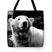 Cute Knut Tote Bag by John Rizzuto