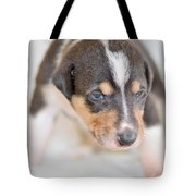 Cute Smooth Collie Puppy Tote Bag