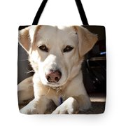 Cute White Dog Tote Bag