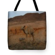 Cute Young Camel Desert Sinai Egypt Tote Bag