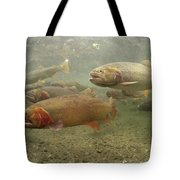 Cutthroat Trout In The Spring Idaho Tote Bag by Michael Quinton