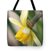 Cyclamineus Daffodil Named Jack Snipe Tote Bag