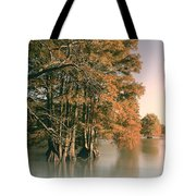 Cypress Autumn  Tote Bag