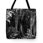 Cypress Knee Tote Bag