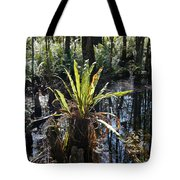 Cypress Knees And Ferns Tote Bag