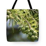 Cypress Nuts Tote Bag