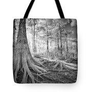 Cypress Roots In Big Cypress Tote Bag