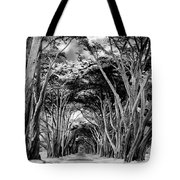 Cypress Tree Tunnel Point Reyes Tote Bag