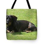 Dachshund Wants To Play  Tote Bag