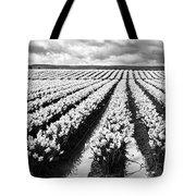 Daffodil Fields II Tote Bag