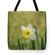 Daffodil Flower Tote Bag