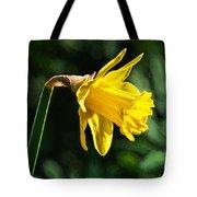 Daffodil - Impressions Tote Bag
