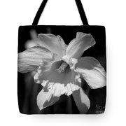 Daffodil In Black And White Tote Bag