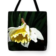 Daffodil In The Rain 2 Tote Bag