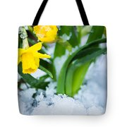 Daffodils In The Snow  Tote Bag