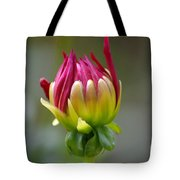 Dahlia Flower Bud Tote Bag