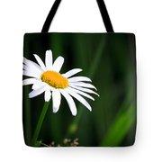 Daisy - Bellis Perennis Tote Bag by Bob Orsillo