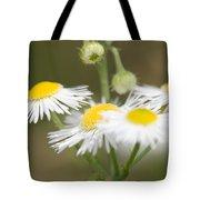 Daisy Fleabane Tote Bag