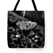 Monochrome Daisy Under Sun Tote Bag