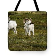 Dall Rams On Alert Tote Bag