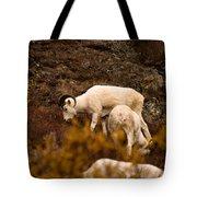 Dall Sheep Grazing Tote Bag