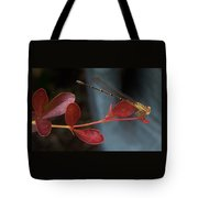 Damselfly On End Of Burning Bush Stem             Summer               Indiana Tote Bag