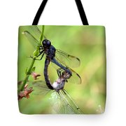 Dance Of The Dragonfliesd Tote Bag