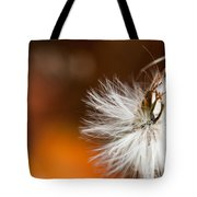 Dandelion Seed Head And Fall Color Background Tote Bag