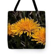 Dandelions In Group  By Leif Sohlman Tote Bag