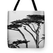 Dark Cypress Tote Bag