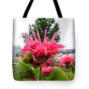 Dark Pink Bergamot Tote Bag
