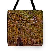 Darker Textured Autumn Trees Tote Bag