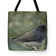 Darkeyed Junco  Tote Bag