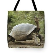 Darwins Finch And Volcan Alcedo Giant Tote Bag