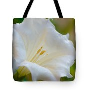Datura Hybrid White Flower Tote Bag