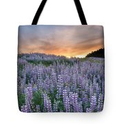 Dawn Of Lupine Tote Bag
