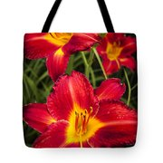 Day Lilies Tote Bag by Adam Romanowicz