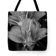 Day Lilies In Black And White Tote Bag