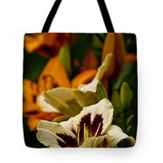 Daylily Picture 487 Tote Bag