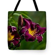 Daylily Picture 526 Tote Bag