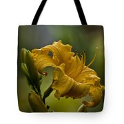 Daylily Picture 558 Tote Bag