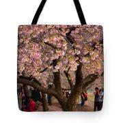 Dc Cherry Blossom Tree Tote Bag