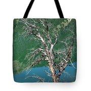 Dead Tree At Green River Lakes -wyoming Tote Bag