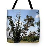 Dead Tree With Ivy Tote Bag